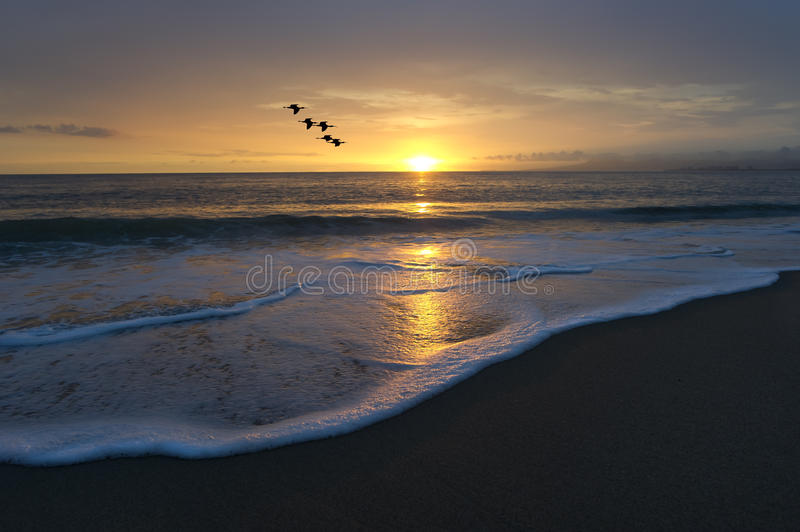 Ocean Beach Sunset Birds Flying. Birds flying across the sky as the ocean water rolls to the beach with the sunset beyond royalty free stock photos