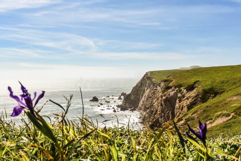 Ocean Cliffs and a Flower. Ocean cliffs off a coast beyond a field of grass and purple flowers stock image
