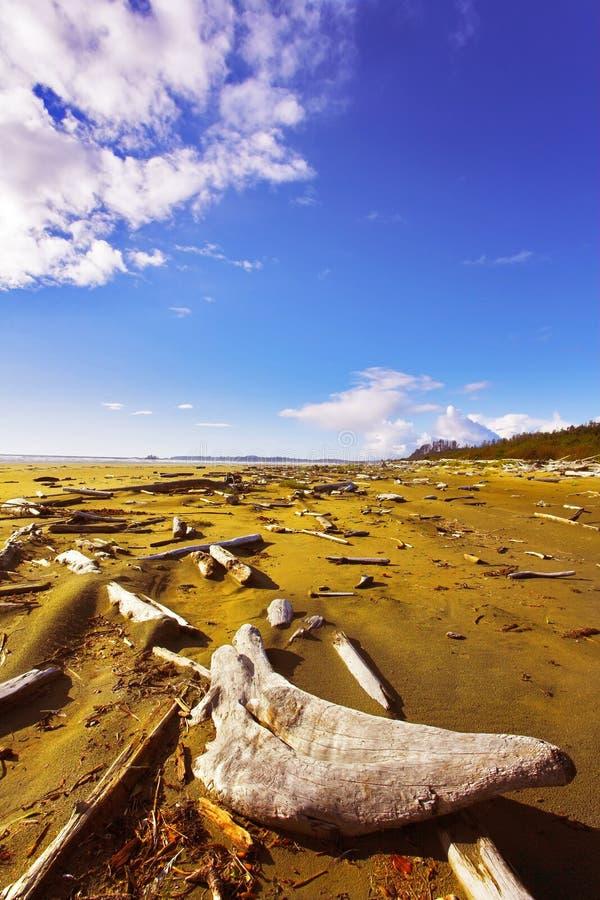Download Ocean Coast On Island Vancouver Stock Photo - Image: 10938254