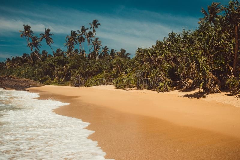 Ocean Coast with pandanus and coconut palm trees. Tropical vacation, holiday background. Wild deserted untouched beach. Paradise i stock photos