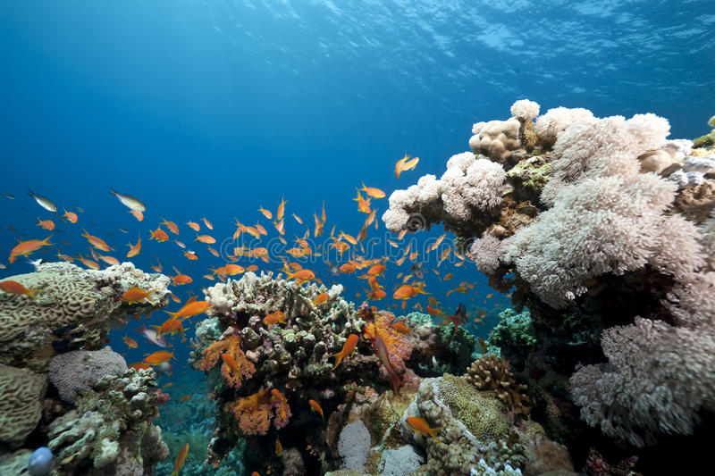 Ocean and coral royalty free stock photo