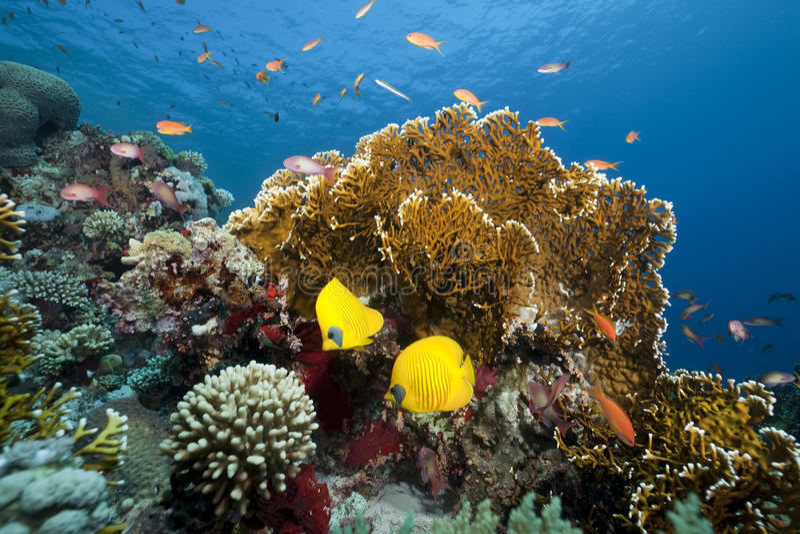 Ocean and coral stock photos