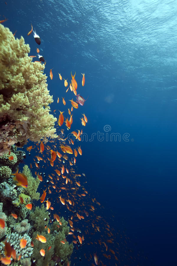 Free Ocean, Coral And Fish Royalty Free Stock Images - 11434469