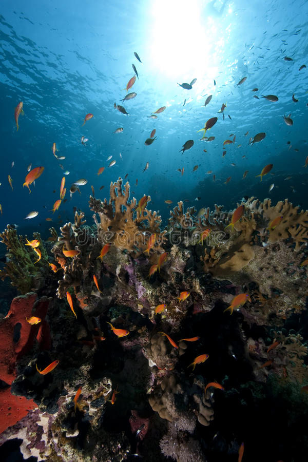 Free Ocean, Coral And Fish Stock Photos - 11973263