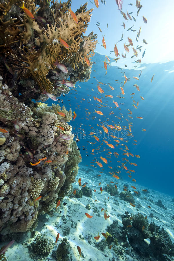 Free Ocean,coral And Fish Stock Image - 12199811