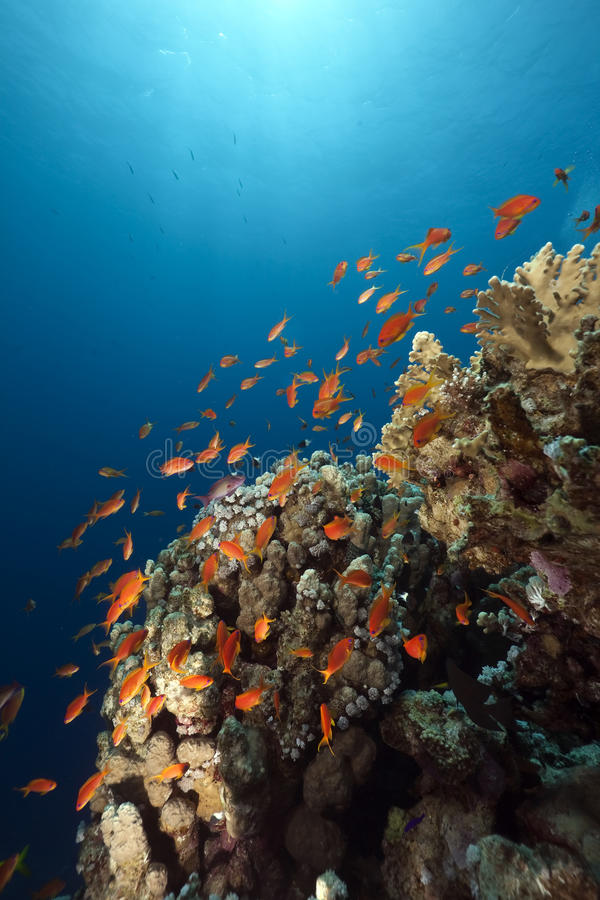Free Ocean, Coral And Fish Royalty Free Stock Image - 13818836