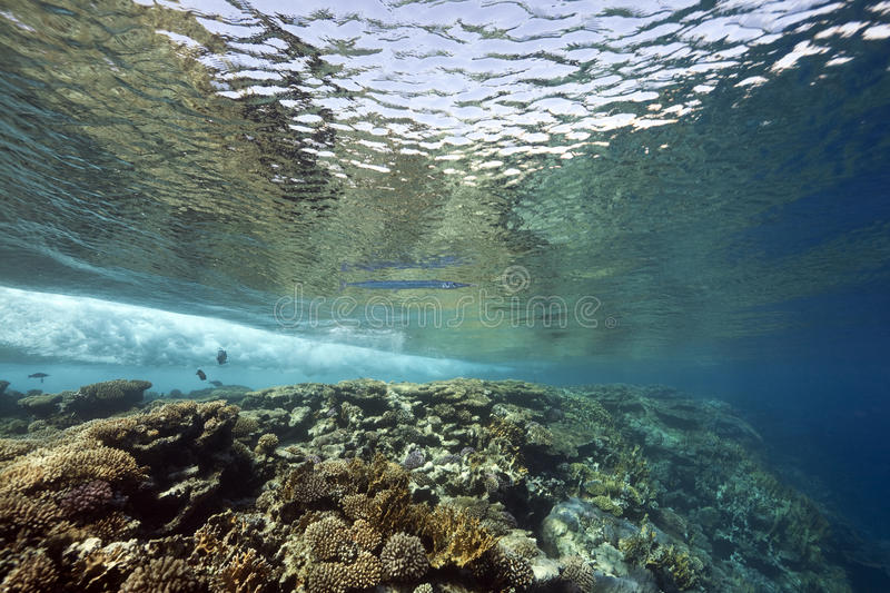 Ocean, coral and fish stock photo
