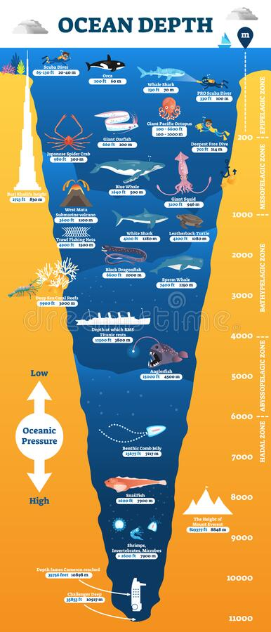 Ocean Depth Underwater Wildlife Infographic  Vector
