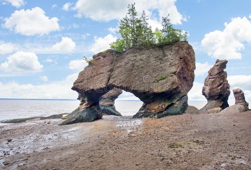 Hopewell Rocks Flower Pots royalty free stock photography