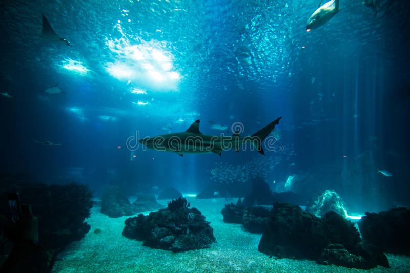 Ocean giant fish world in aquarium for observation. royalty free stock photo