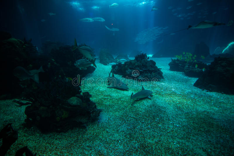Ocean giant fish world in aquarium for observation. royalty free stock images