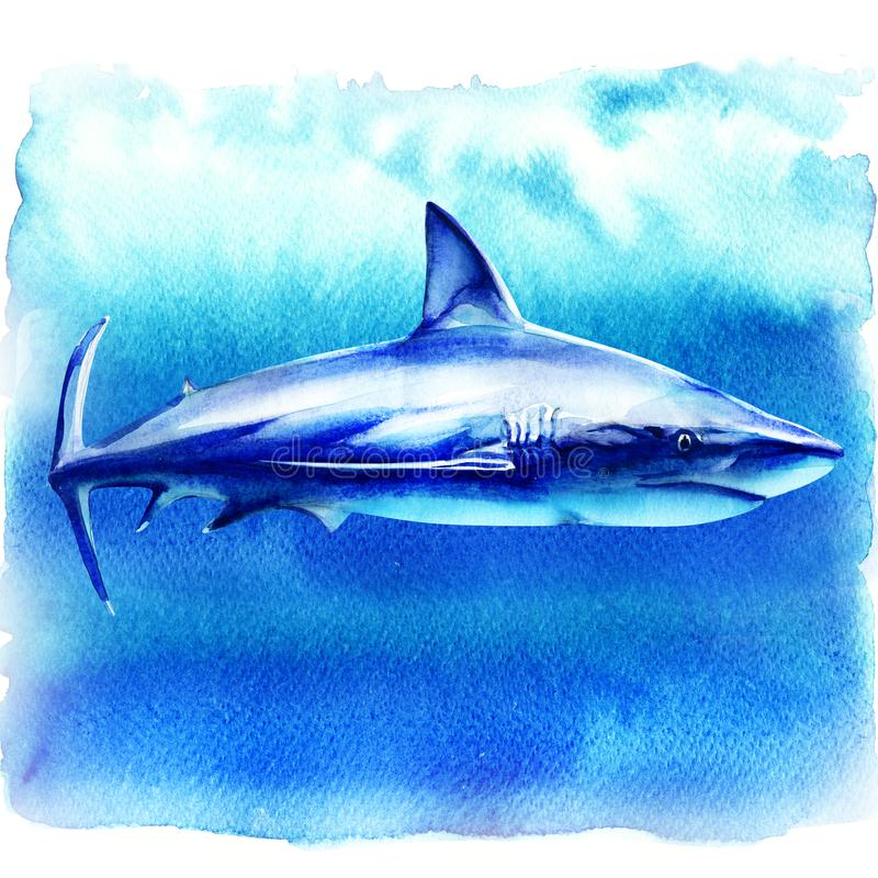 Ocean great white shark in the deep blue water, side view, big fish predator, hand drawn watercolor illustration on. White background vector illustration