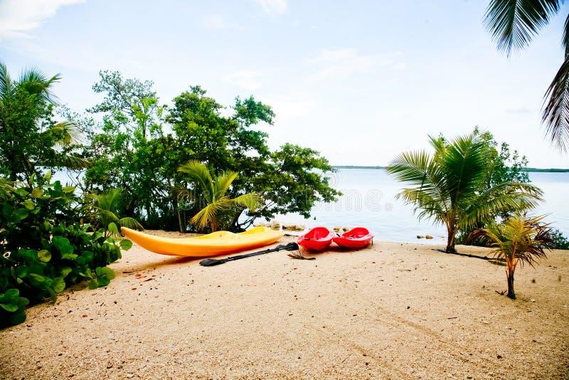 Download Ocean Kayaks stock photo. Image of palms, ethereal, gentle - 20983718