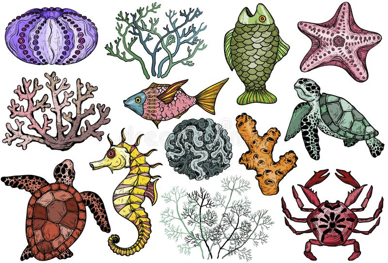 Ocean life organisms, shells, fish, corals, sea horse, crab and turtle. royalty free illustration