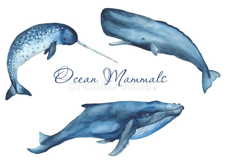 Ocean mammals watercolor. Illustration of jellyfish, whale, narwhal, sperm whale on a white background. For cards, invitations, weddings, logos, quotes, marine vector illustration
