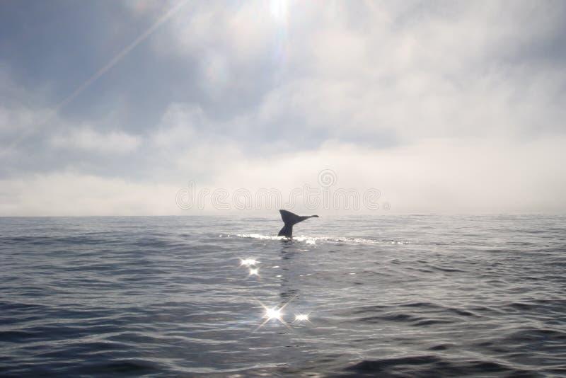 Ocean, Marine Mammal, Horizon, Sea royalty free stock photo