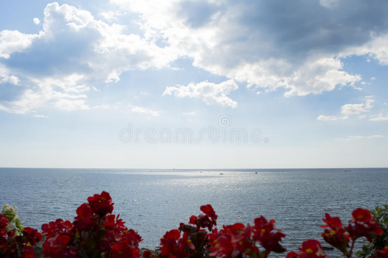 Ocean meets sky - horizon view with flowers. Photo looking out over the sea and sky a sunny summer day. Red flowers framing the foreground stock image