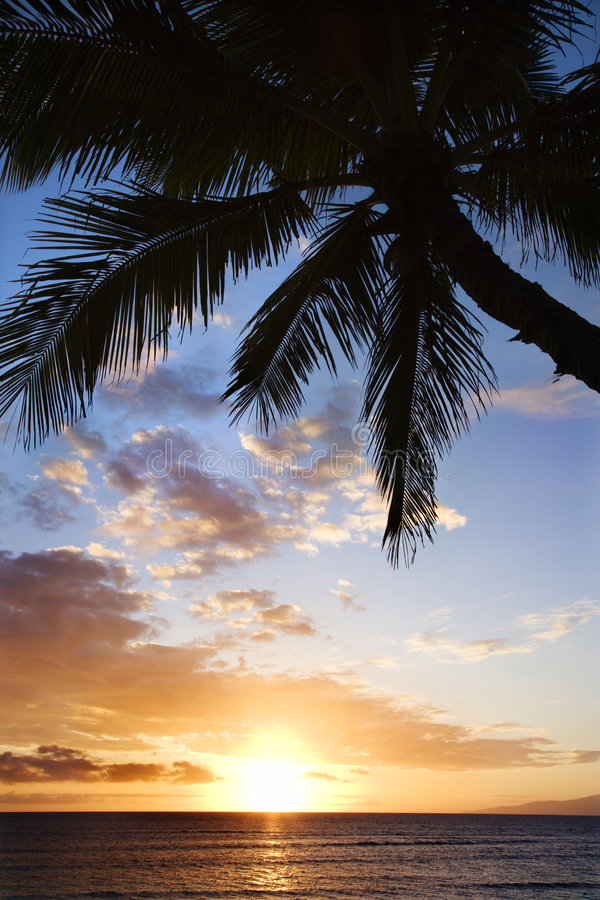 Download Ocean Palm In Maui At Sunset. Stock Photo - Image: 2044500