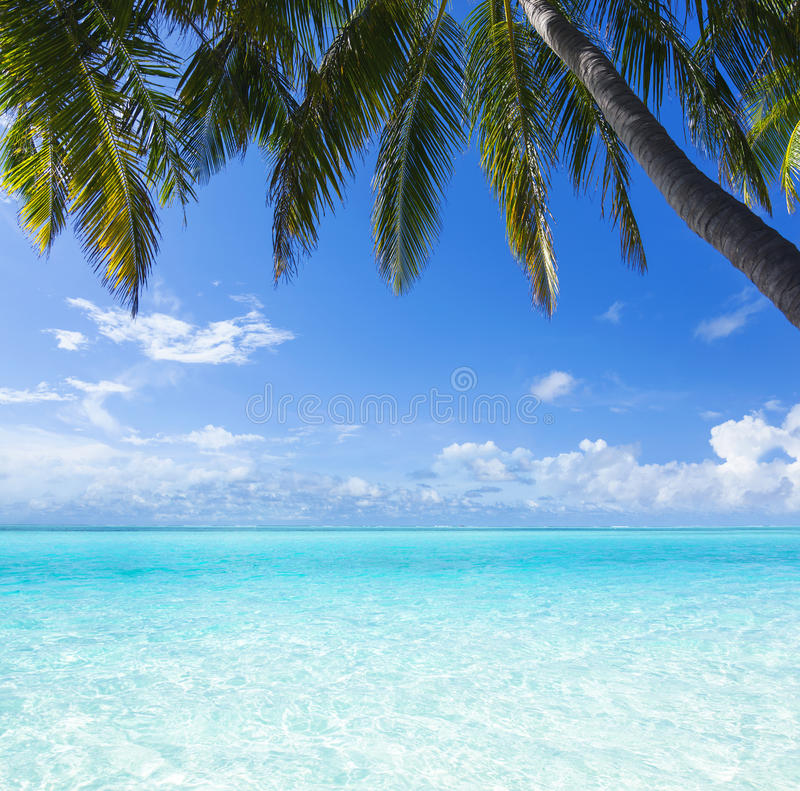 Download Ocean, palm, paradise stock image. Image of scene, nature - 33774155