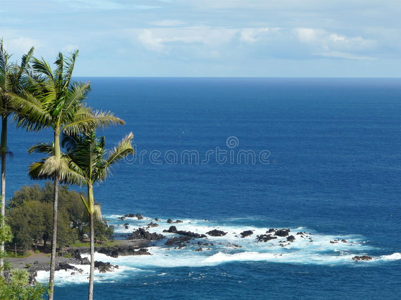 Ocean and Palm Trees royalty free stock photo