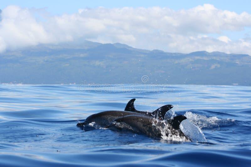 Ocean's Beauty stock photos