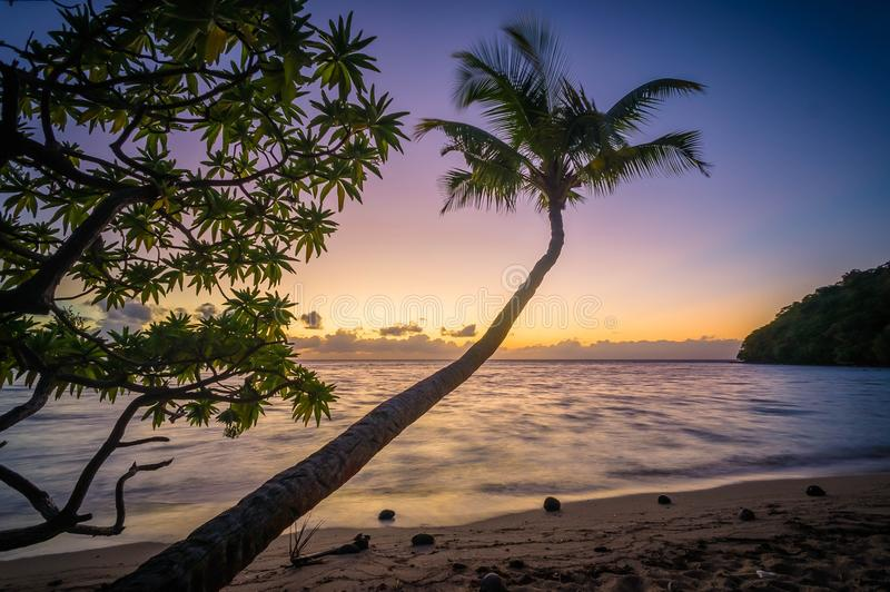 Ocean Sea Evening Palm Trees Sunset stock photos