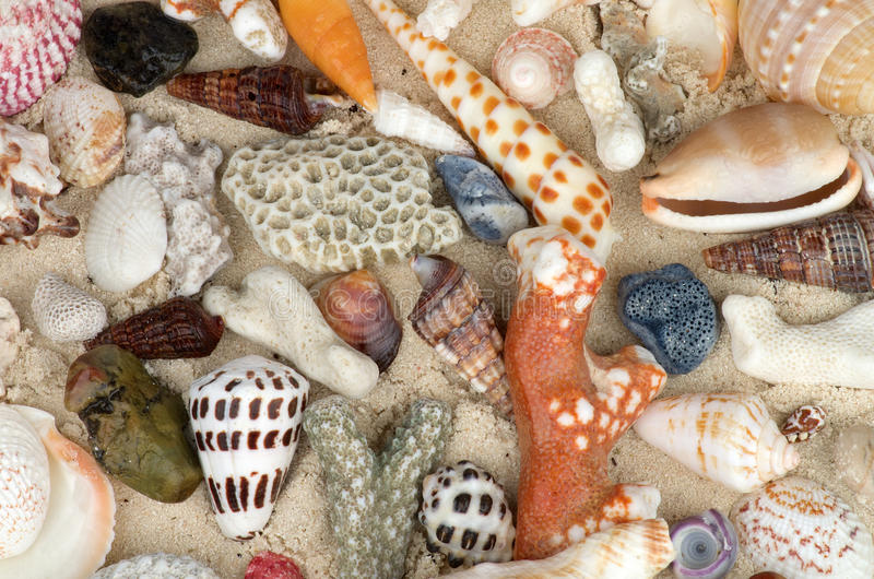 Download Ocean Shell Background Royalty Free Stock Photography - Image: 29253177