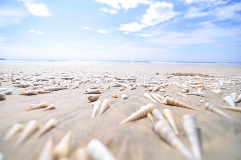 Ocean shells stock photo Image of sand playa tide 12416840