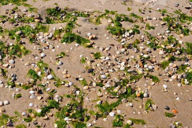 Ocean side beach of Tavira island. Wetted by the surf strip of the beach on the ocean side of the island of Tavira. Sand, shells and seaweed. Portigal. Algarve stock photos