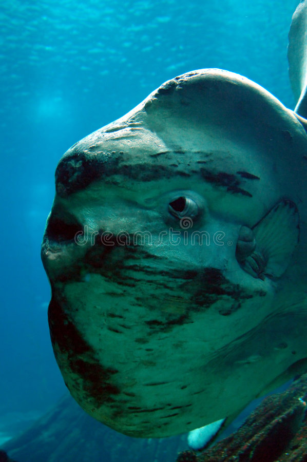 Ocean Sun fish royalty free stock images