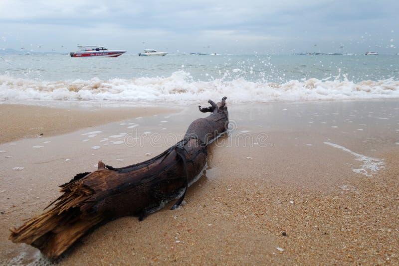 Ocean Tree Timber on the beach stock photos