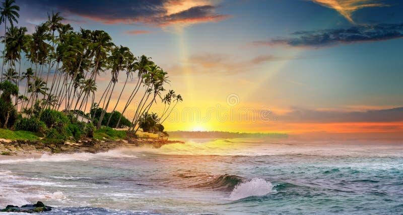 Ocean, tropikalne palmy i piękny zmierzch, zdjęcia royalty free