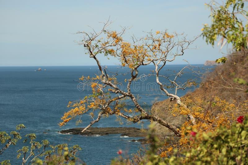 Ocean View royalty free stock photo