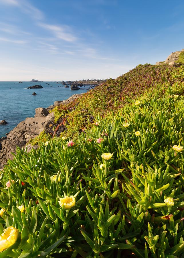 Ocean View over Iceplant Flowers. Northern California, Color Image stock photos