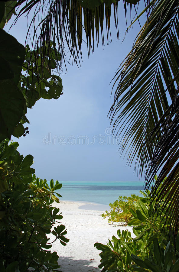 Download Ocean View Through Tropic Vegetation Stock Image - Image: 37427043