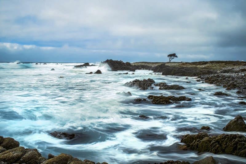 Ocean w ruchu wzdłuż Kalifornia wybrzeża z Pojedynczym Cyprysowym drzewem na horyzoncie zdjęcia stock