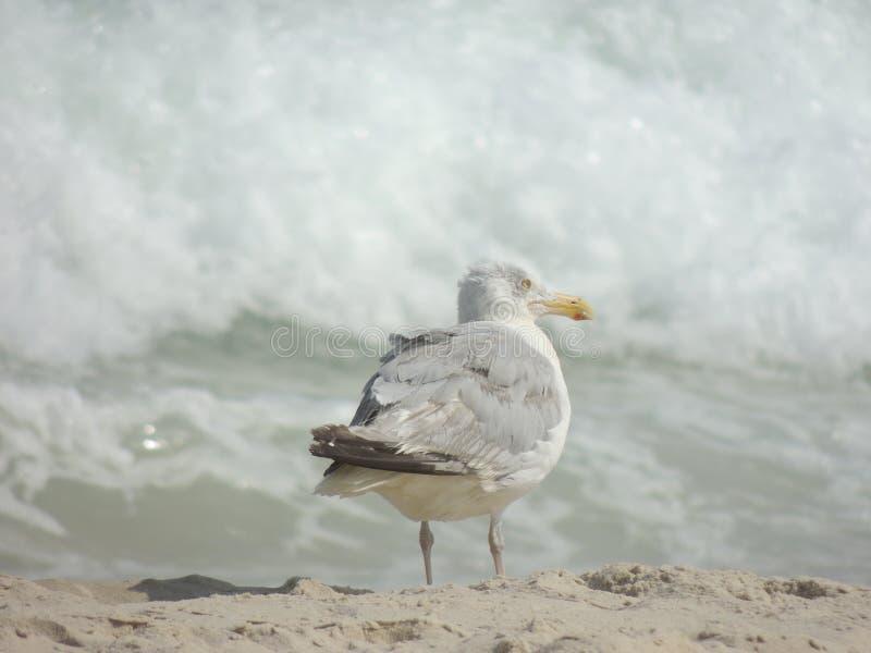 Ocean Watch stock images