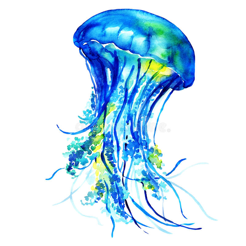 Ocean Water Jellyfish. Isolated, watercolor painting on white background royalty free illustration