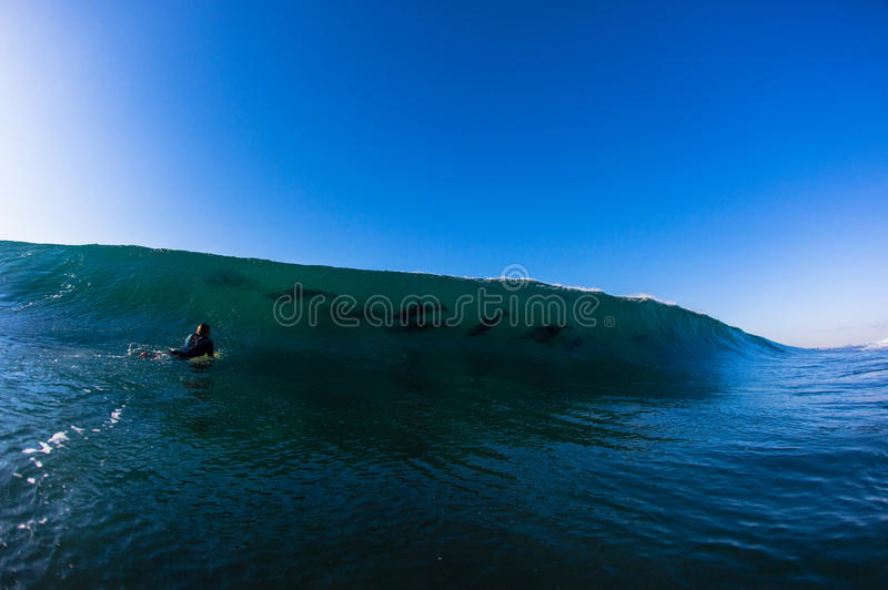Ocean Wave Dolphins Surfer. Surfer has a close up face to face experience of watching a school of dolphins surfing a vertical wave close the a shallow reef right