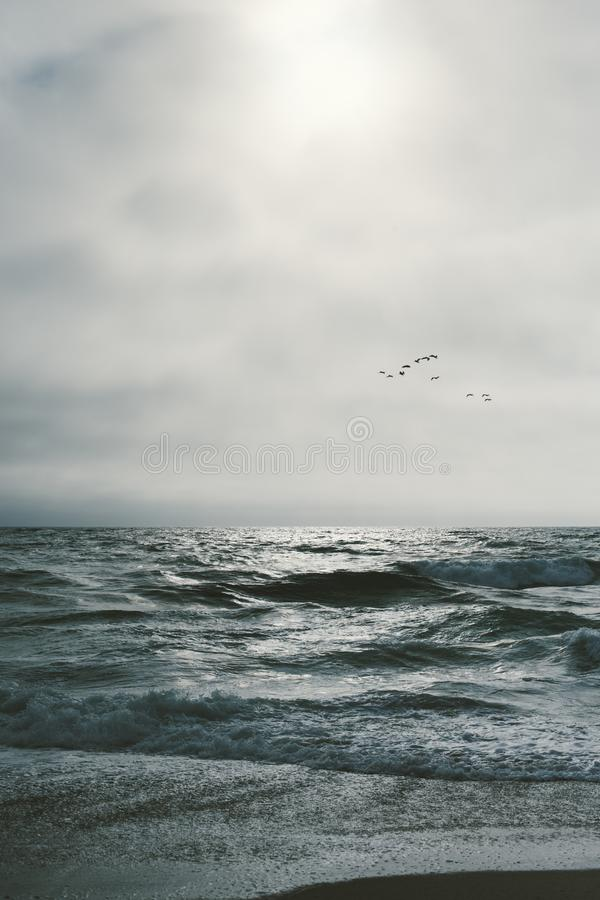 Bird flock over the ocean. Ocean waves with birds, gray skies and copy space royalty free stock photography