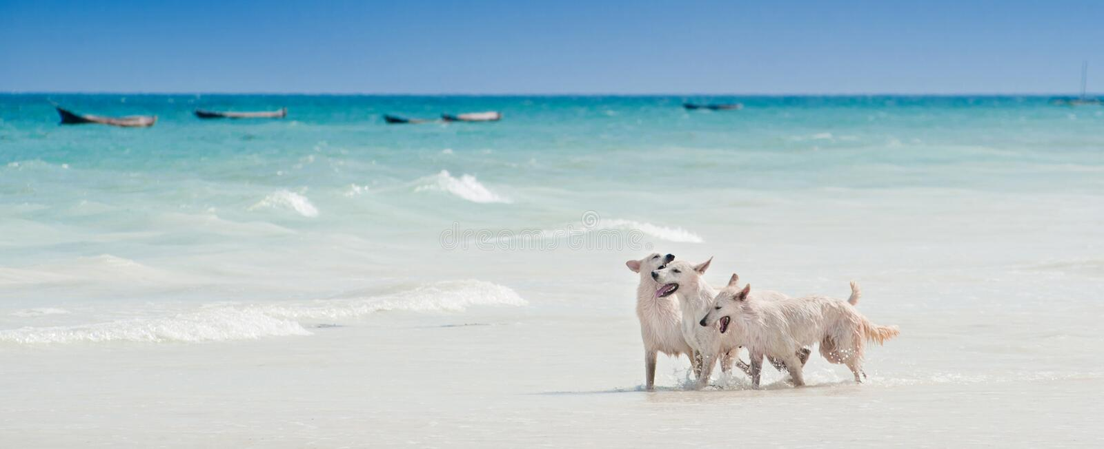 Ocean, white beach blue sky sand sun sunny day relaxation landscape design postcard calendar dogs play and splash on royalty free stock photo