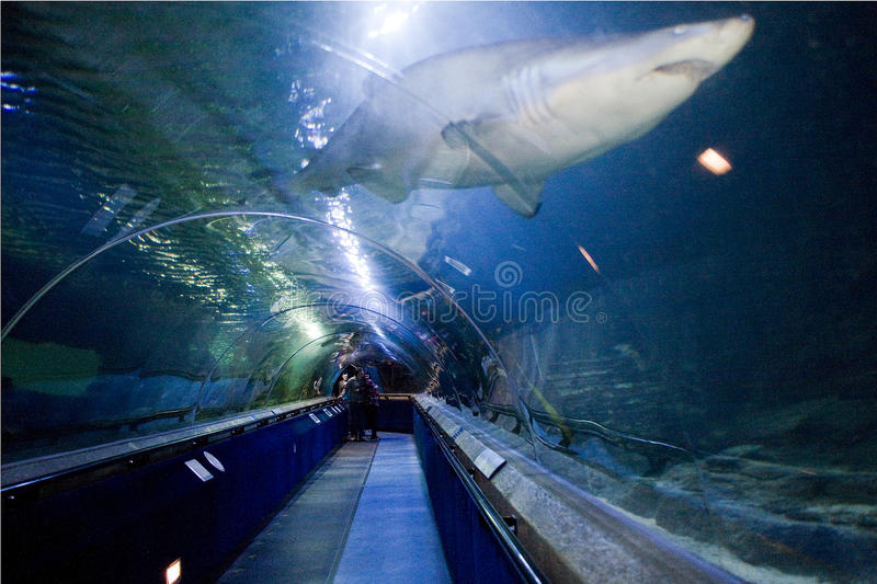 Ocean World North Queensferry Fife Scotland aquarium and sealife centre underwater shark tunnel with visitors stock image