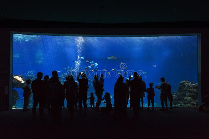 Oceanarium в Eilat, Израиле стоковая фотография