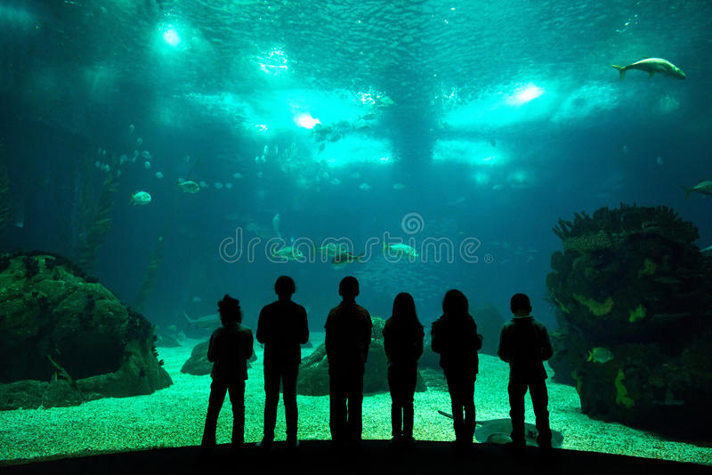 Oceanarium stockfotos