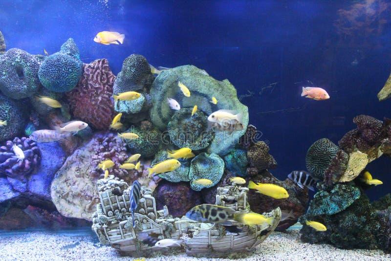 Oceanarium 图库摄影