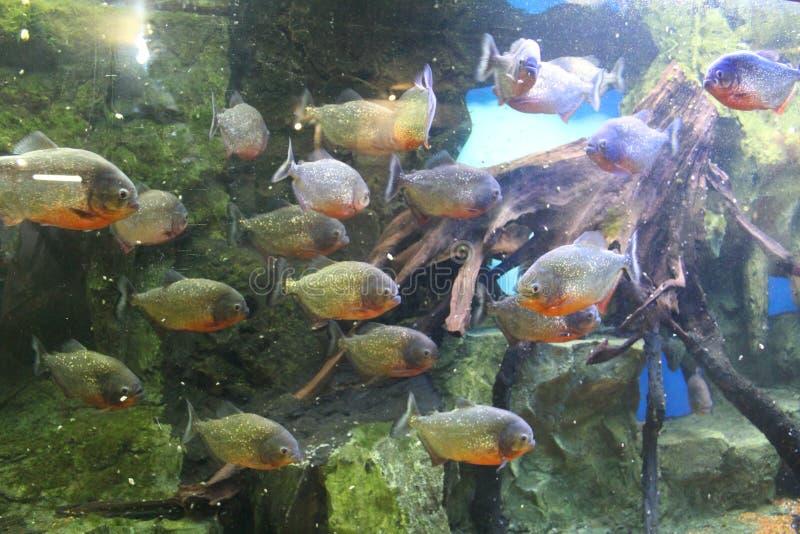 Oceanarium 库存图片