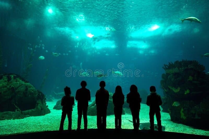 Oceanarium stock photos