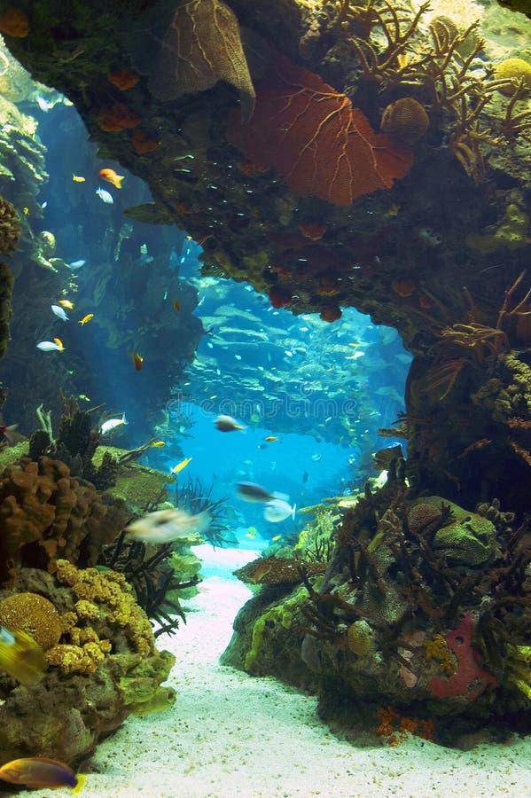 Oceanarium de Lisbonne photos libres de droits