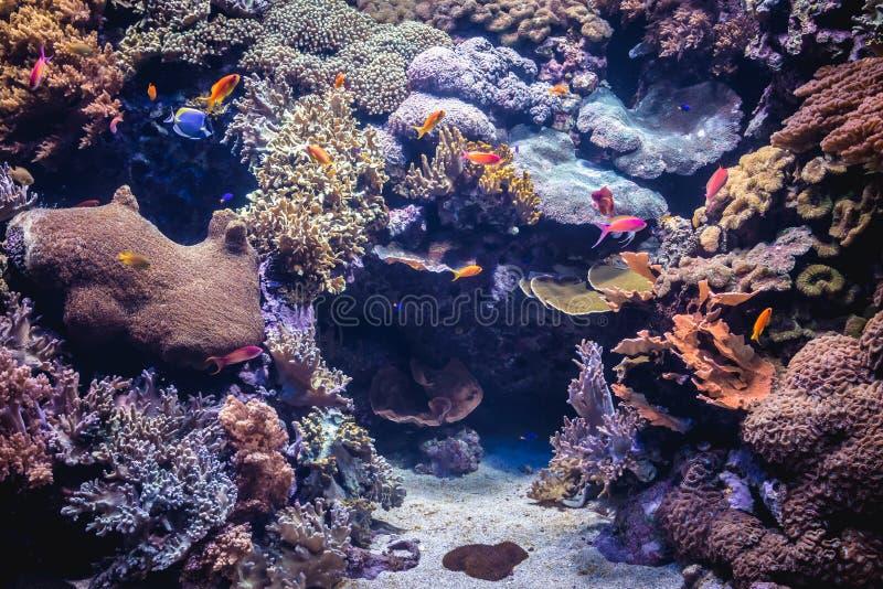 Oceanarium a Lisbona fotografie stock libere da diritti