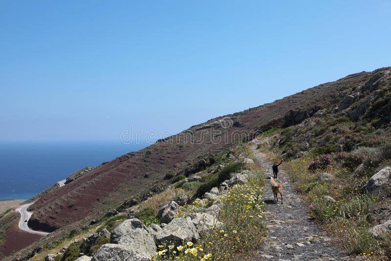 Oceanfront på den Santorini ön arkivbild